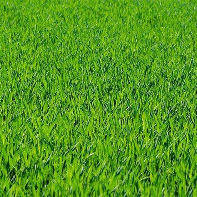 Tareas imprescindibles para un correcto mantenimiento de jardines