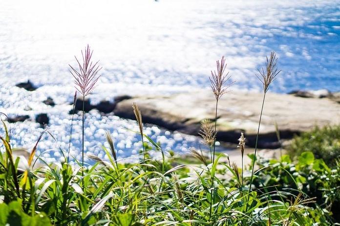 Naturopatía: Servicios de Biota Natura