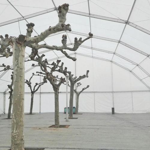 Carpas para invernaderos Málaga
