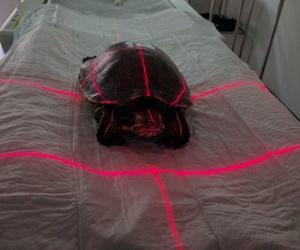TAC Tortuga acuática con problemas respiratorios