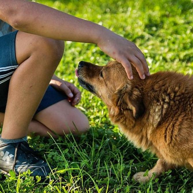 El peligro de la procesionaria para los perros