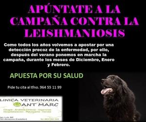CAMPAÑA CONTRA LA LEISHMANIOSIS