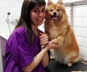 Peluquería perro y gato | Clínica veterinaria Parque Bruil