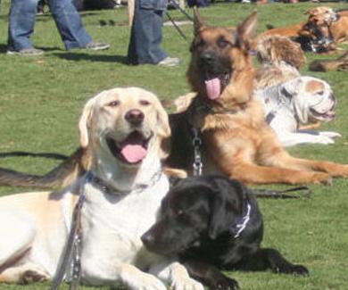 Adiestramiento de perros en Sant Pere de Vilamajor