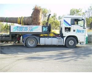 Transporte de palmera