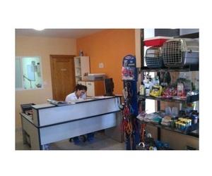 ¡ Nuevo Centro veterinario en Cebreros !