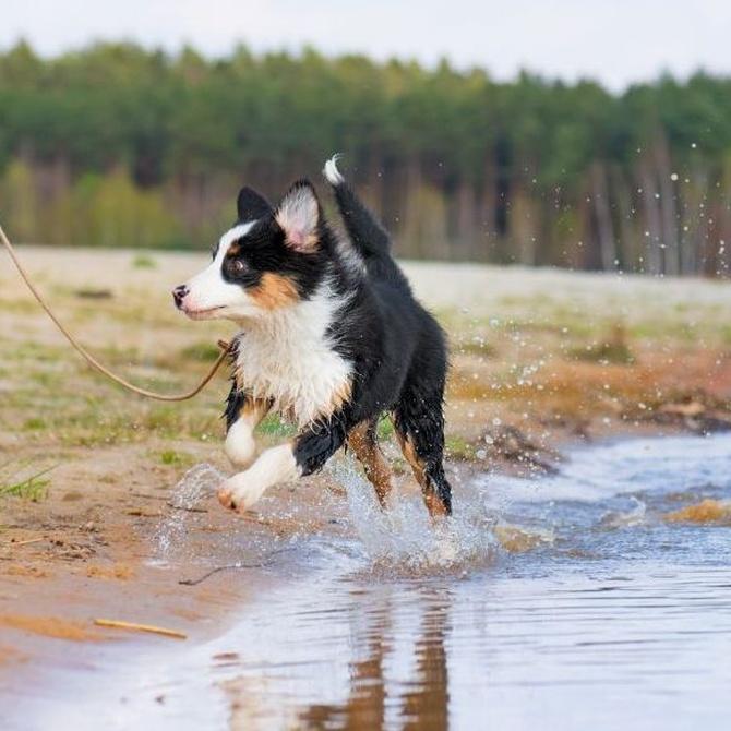 Cómo puede vencer tu perro el miedo al agua