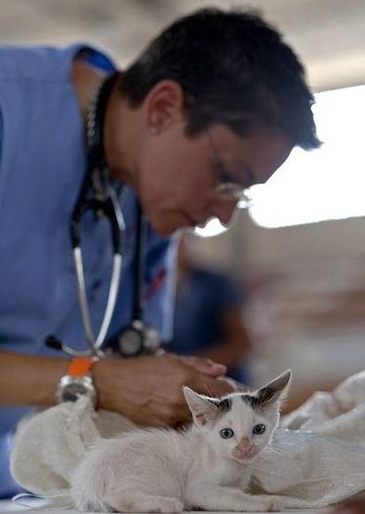 Analíticas veterinarias: Tratamientos de Centro Veterinario Ejido Sur
