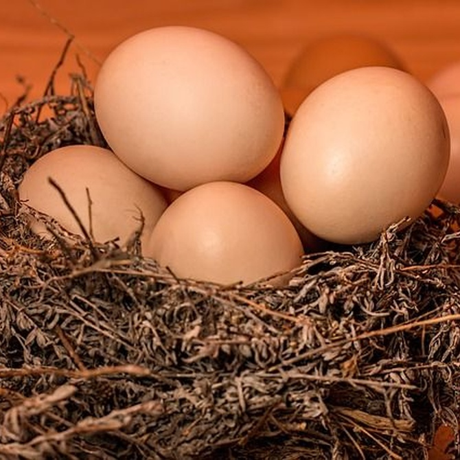 ¿Qué te aporta un huevo?