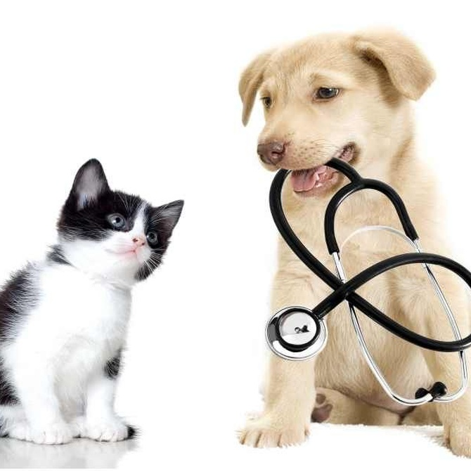 Por qué contar con una buena clínica veterinaria