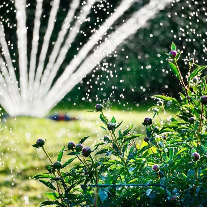 La importancia del agua para tu jardín