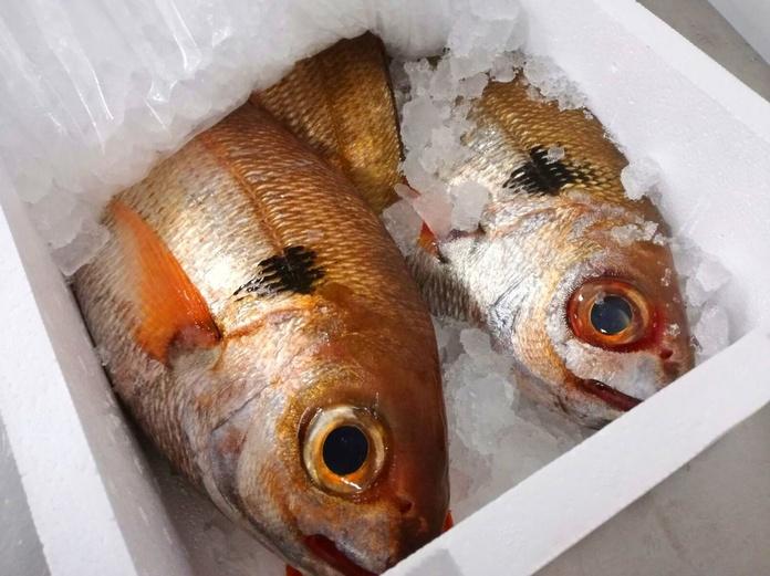 Besugo: SERVICIOS de Pescastur