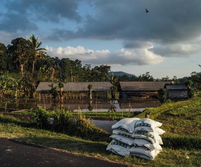 Fertilizantes: Productos y Servicios de El Jardín de tu Casa