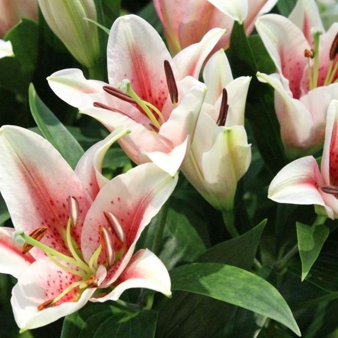Ventajas de las flores liofilizadas