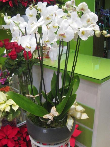 Orquídeas: Catálogo de flores y plantas de Floristería Pétalos