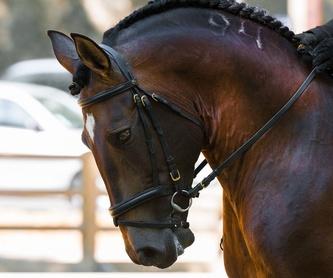 Clases de equitación Sevilla: Nuestros servicios de Centro Hípico Doble M