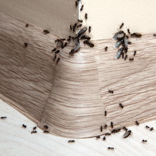 Control de plagas de insectos en Guipúzcoa
