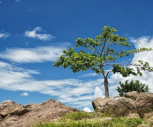 Tipos de plagas de árboles