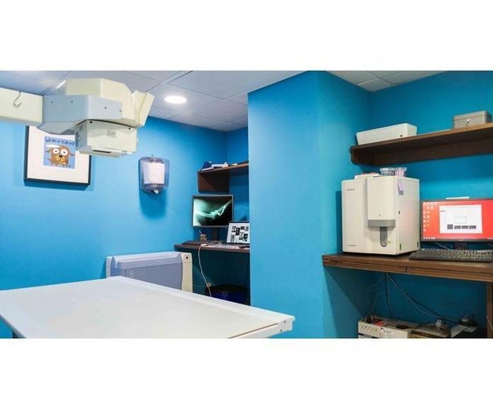 Veterinarios en Torremolinos / Clínica Veterinaria Vetsur | clínica veterinaria en Torremolinos
