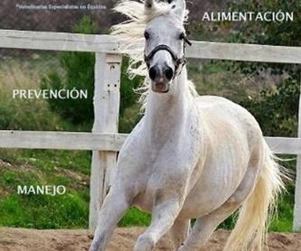 BABYPONY: Servicios de Hípica Riding School