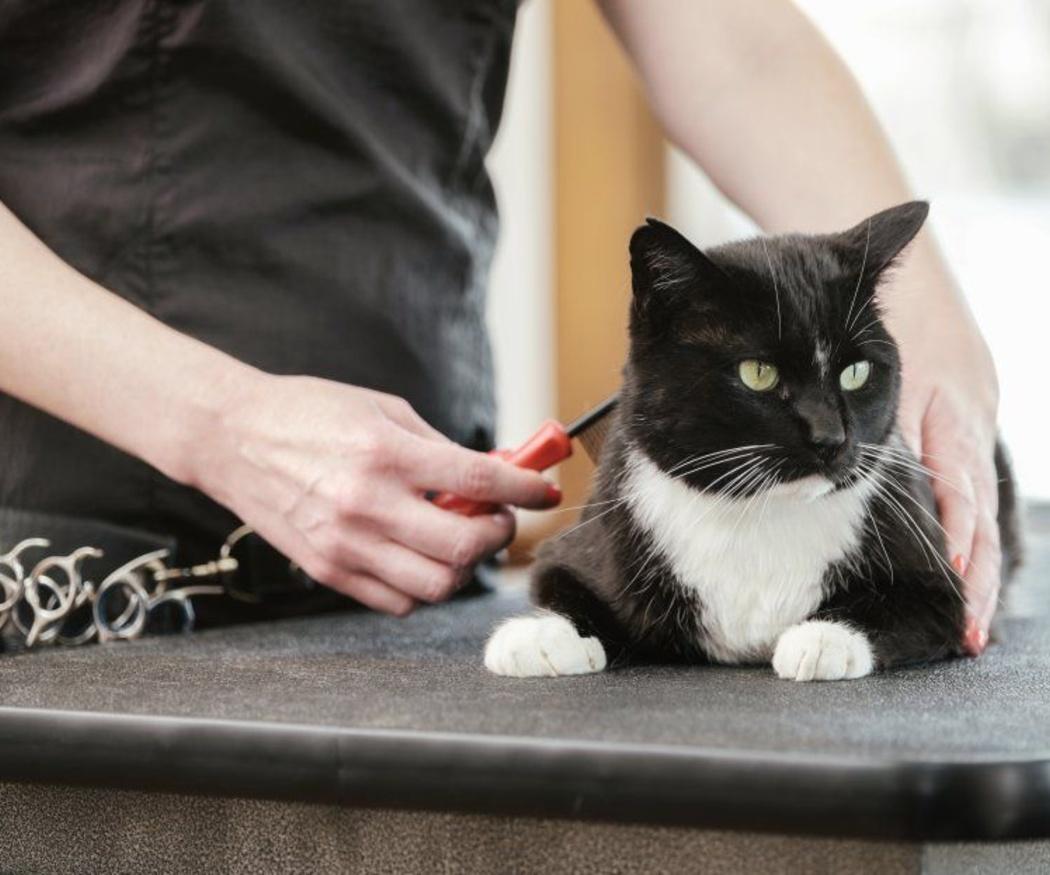 Las claves para prevenir la bolas de pelo en tu gato