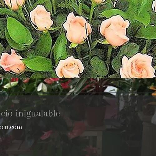 Flores a domicilio Les Corts Barcelona | Sarria Flors