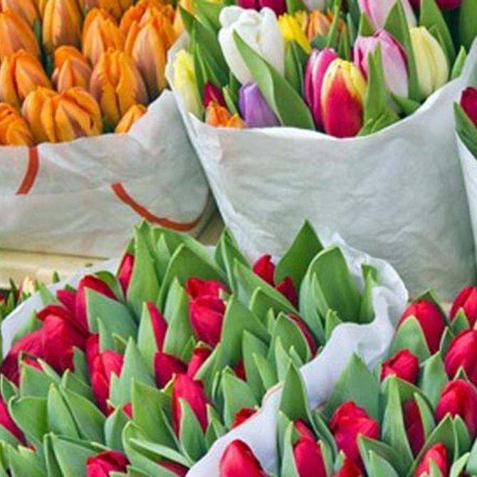 Consigue que tus flores duren más tiempo