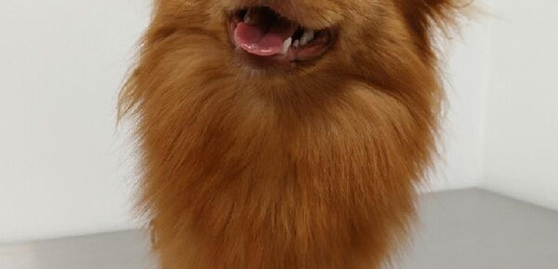 Peluquería canina en Tenerife a buenos precios