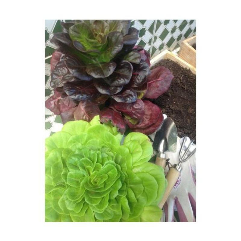 Plantas para el huerto: Catálogo de Flores Maranta