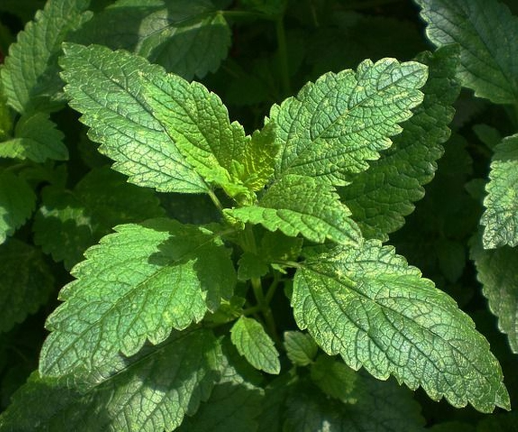 ¿Para qué sirven las plantas medicinales?