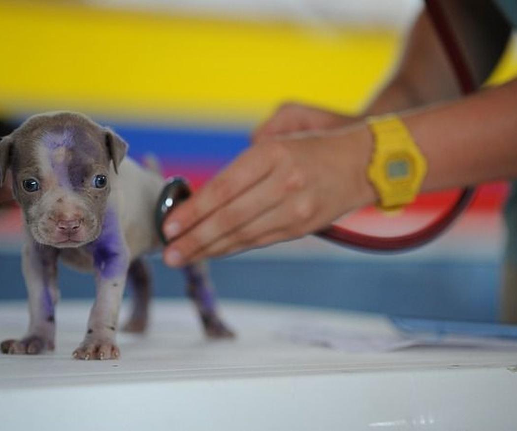 El origen de los veterinarios