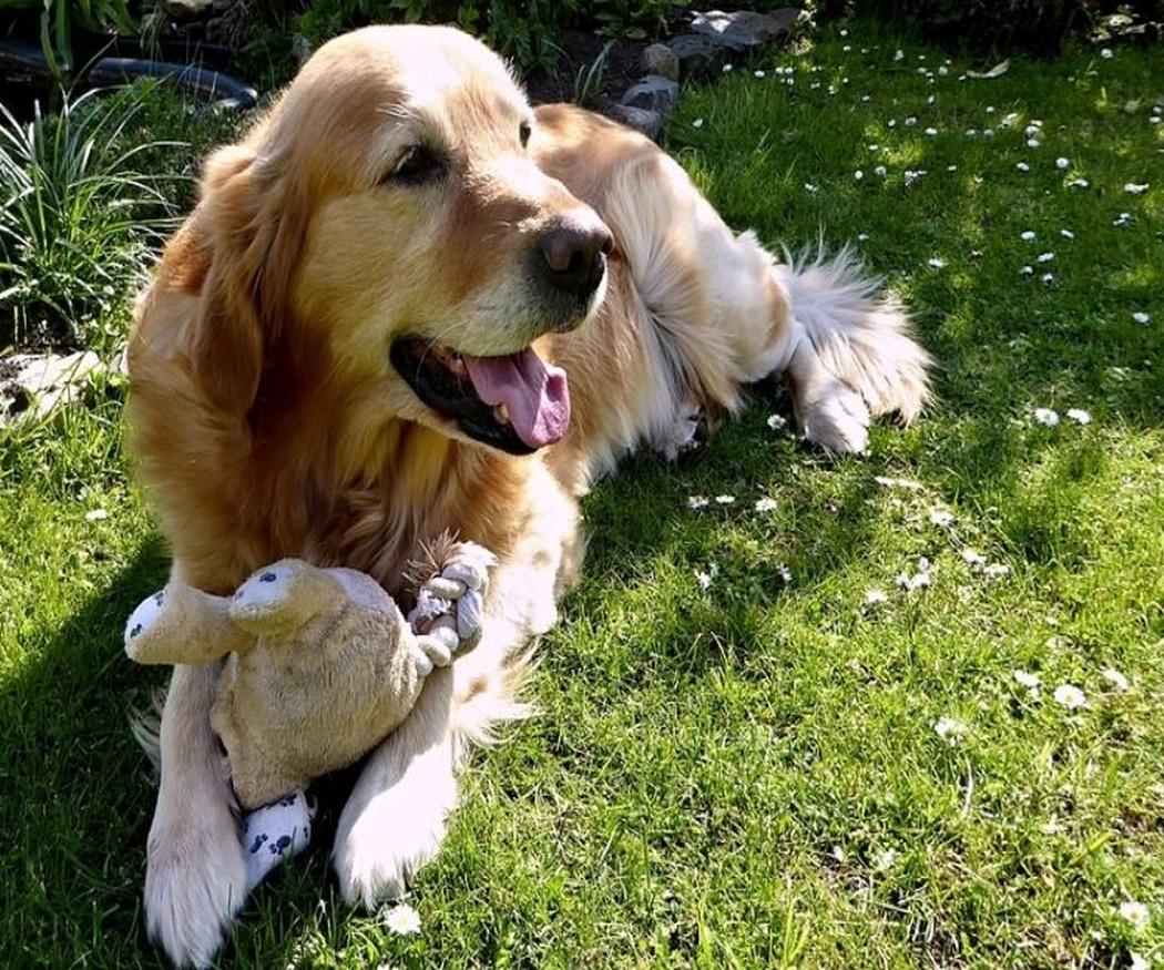 Mantén el jardín cuidado para tu mascota