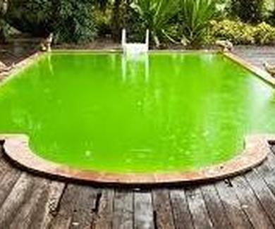 Los fosfatos, el alimento de las algas en nuestra piscina
