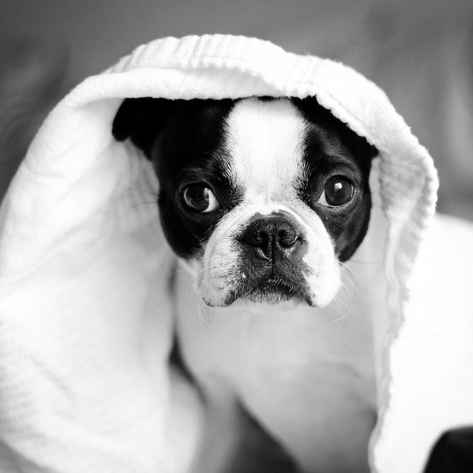 Cómo reducir el estrés de tu perro cuando lo llevas a la peluquería canina (o al veterinario)