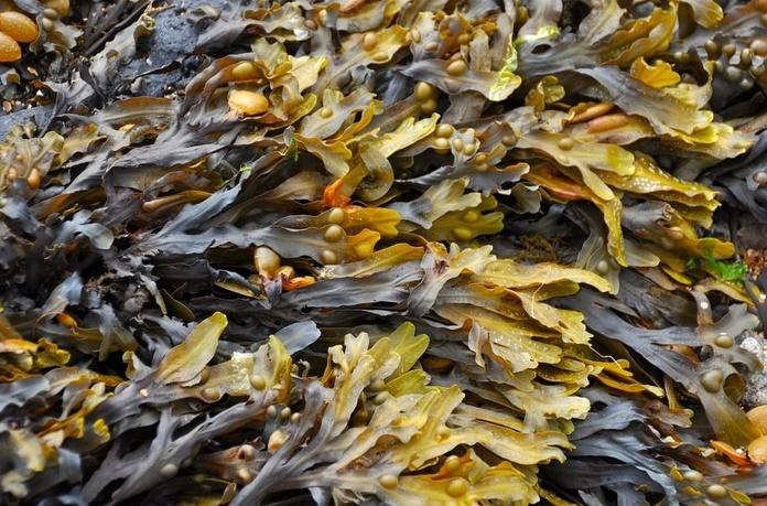 Las algas marinas: Cuidados naturales de Herbolario Melisa Alimentación Natural