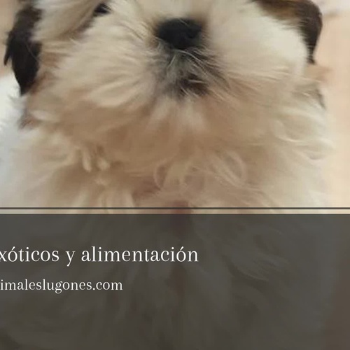 Venta de animales en Asturias | Mila Bierzoo