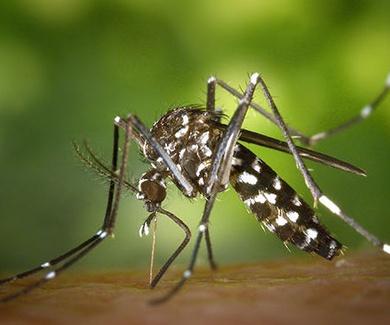 Según los CDC, las mujeres asiáticas debería de evitar el sudeste asiático debido al Zika