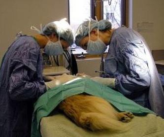 Productos: Servicios de Clínicas Veterinarias Panda