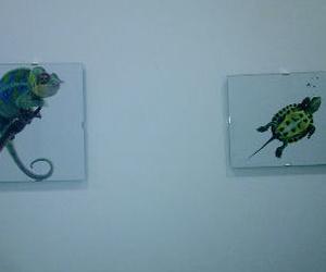 Foto camaleón y tortuga