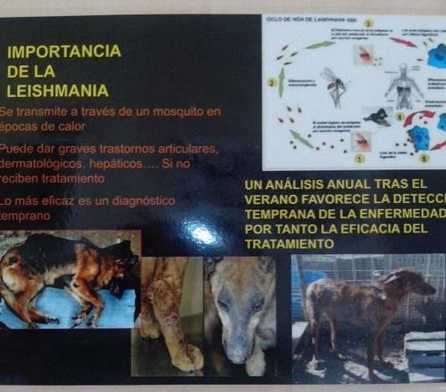 Fotos de Veterinarios en Faura | Clínica Veterinaria Les Valls