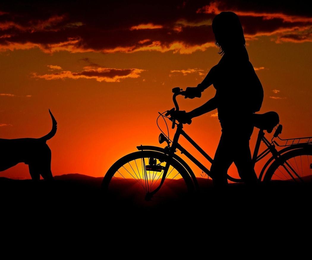 Beneficios psicológicos que tendrás con un animal en casa