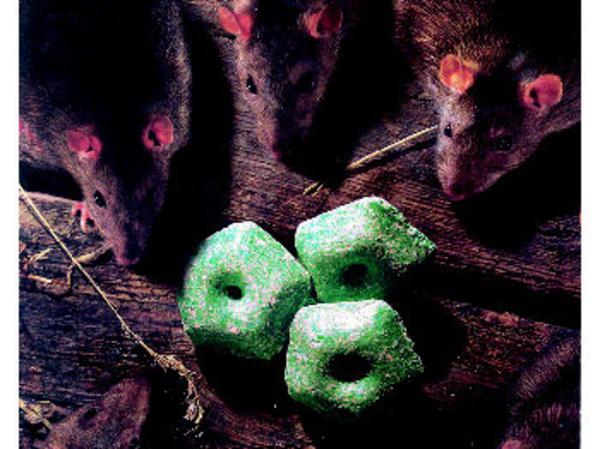 Para eliminar ratas en Valencia con rapidez y seguridad acuda a Ecoambiente Sanidad Ambiental.