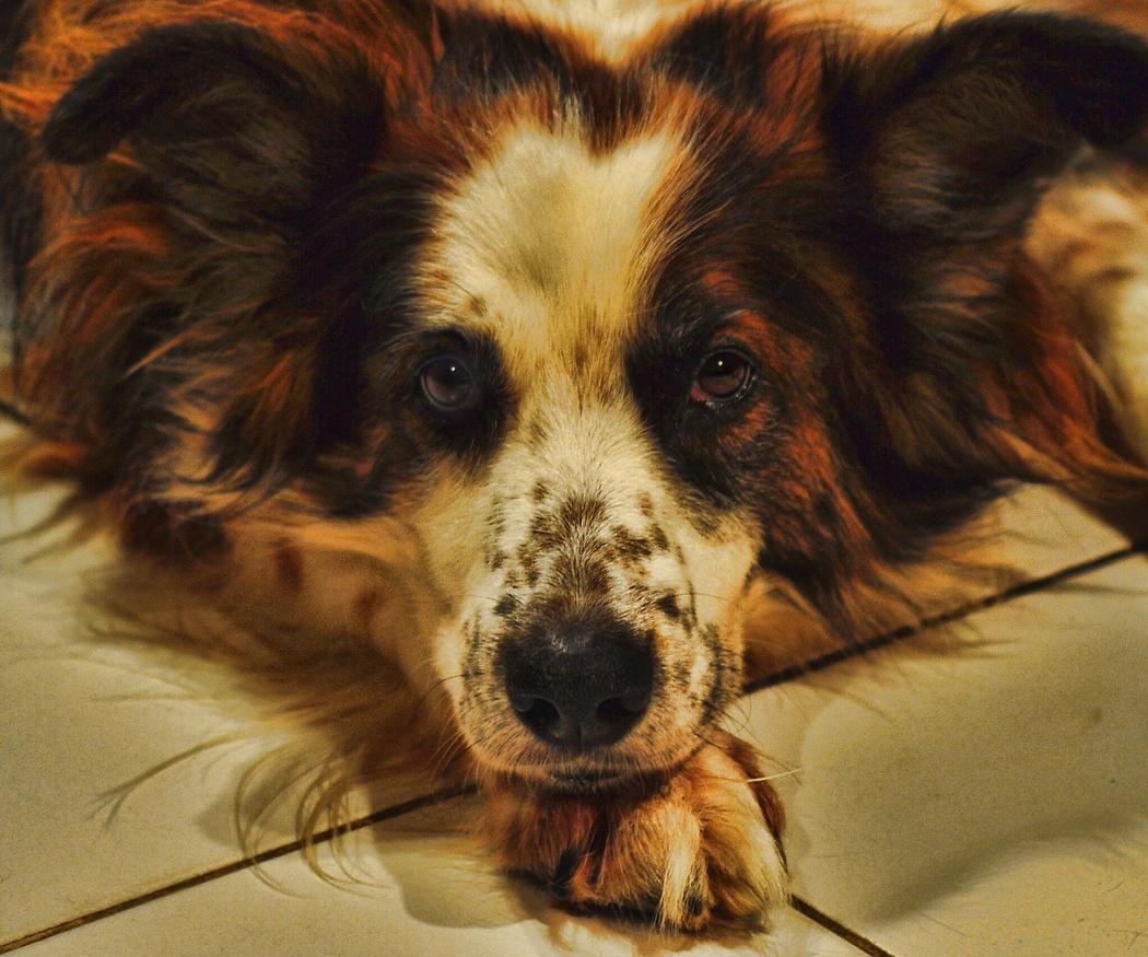Aprende a frenar el estrés en perros