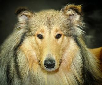 Baño: Servicios de Beauty Dog Spa