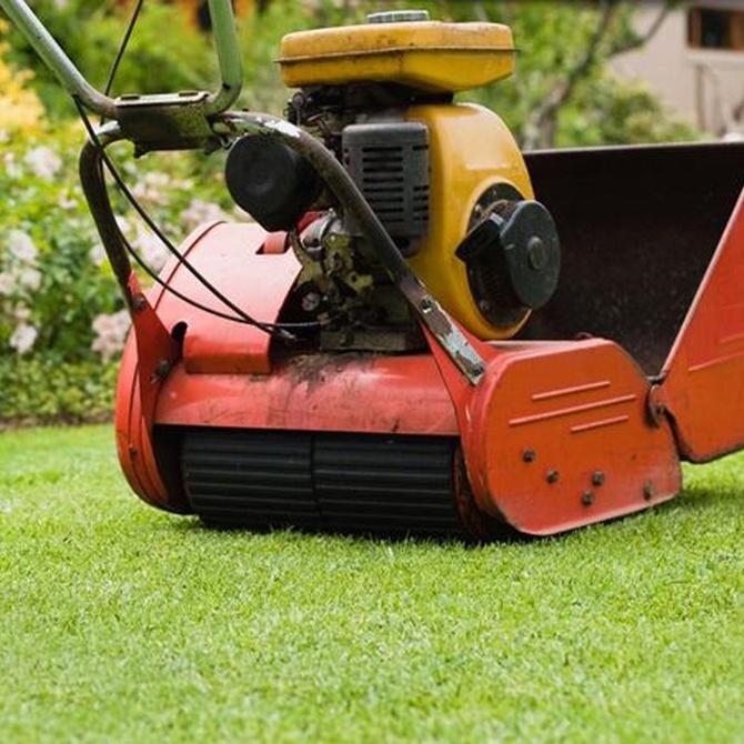 Cuidados básicos para tu jardín