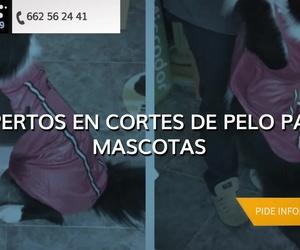 Peluquería para perros en Burgos | Jabondog