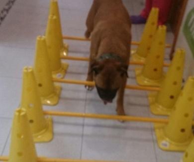 Fisioterapia veterinaria en Móstoles