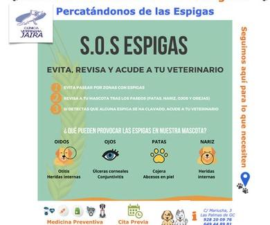 Nuestras Mascotas aún MÁS Protegidas: Percatándonos de las Espigas