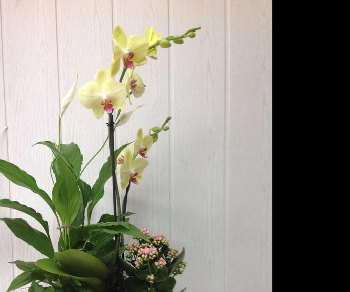 Orquideas: Catálogo de Flores Maranta