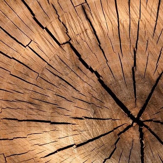 ¿Cuáles son los mejores tipos de madera para tus muebles?